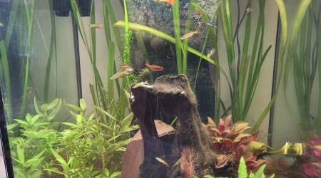 aquarium NATHAN1