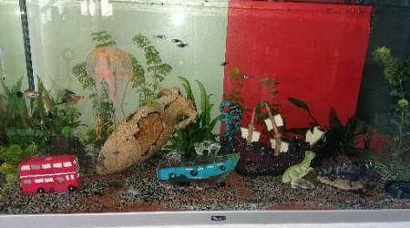 aquarium Aquarium actuel