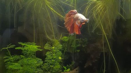 aquarium Nano 20L Betta