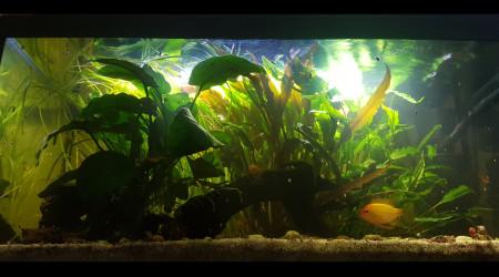 aquarium Little River