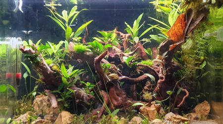aquarium 7A 43 L Crevettes