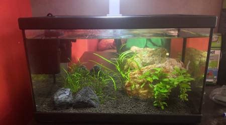 aquarium Aquarium eau douce 18l