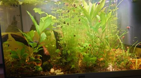 aquarium Kestufela   140 L