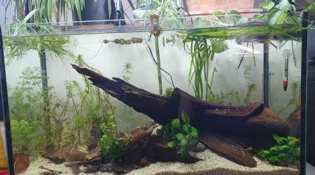 aquarium Low tech 110