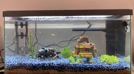aquarium Maison