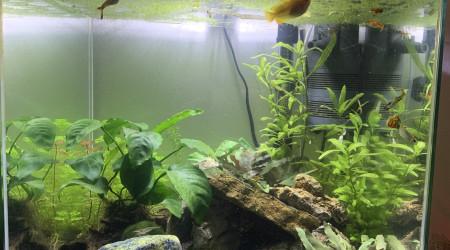 aquarium Cube 54L