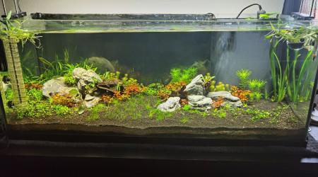 aquarium communautaire en creation