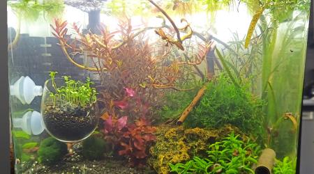 aquarium Green and Gold