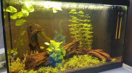 aquarium Aquadisio - Sarawak 40 litres