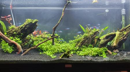 aquarium Mon 240