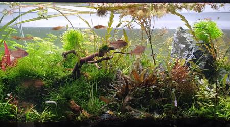 aquarium Au bonheur des crevettes