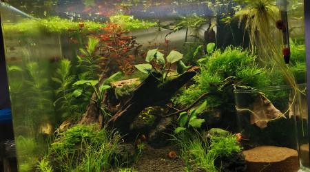 aquarium 55L KILLIES