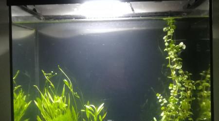 aquarium 30L beta