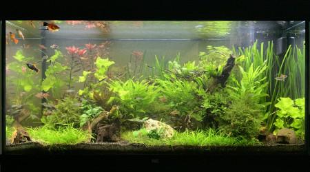 aquarium Juwel Rio 350