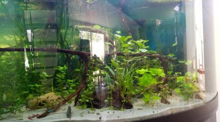aquarium 350l angle