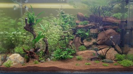 aquarium Rouge