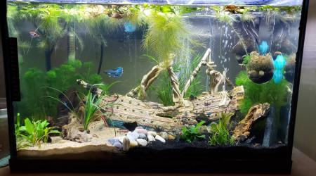 aquarium 30 gallon
