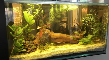 aquarium Mon aqua