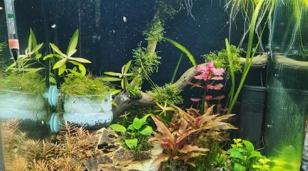 aquarium En lancement 60L CPO boraras