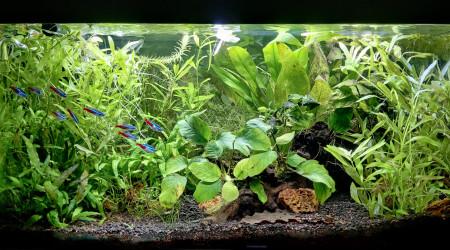 aquarium Aquarium 60L