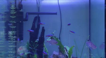 aquarium Aquadisio 130 litres