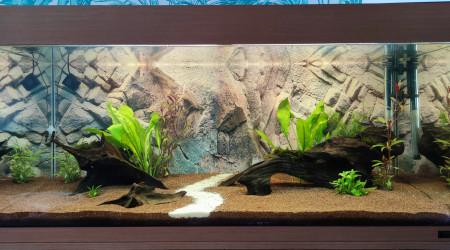 aquarium Biotope Amazonien Lowtech