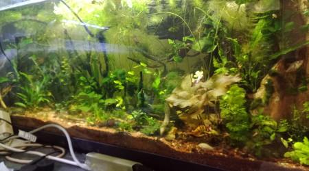 aquarium Jupitaires