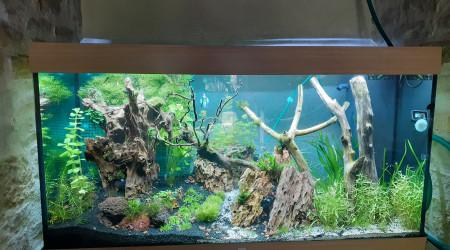 aquarium trouve ton chemin