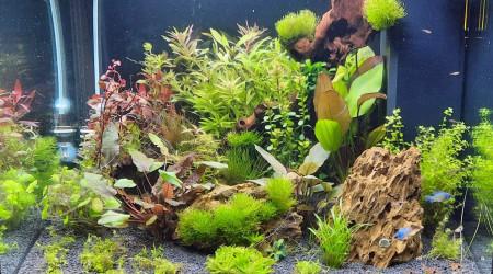 aquarium fabien