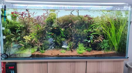 aquarium 300 litre