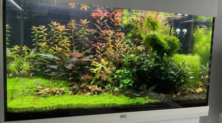 aquarium 125L