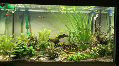 aquarium Aquarium 120l eheim