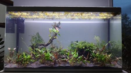 aquarium Osaka 320