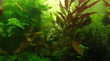 aquarium nano kubotai