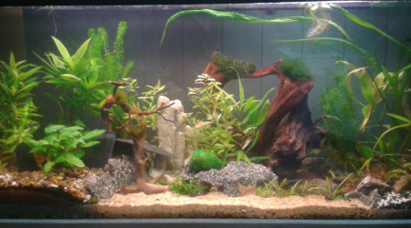 aquarium Mlpou