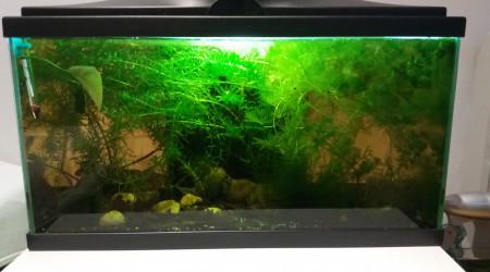 aquarium 58 L ciano
