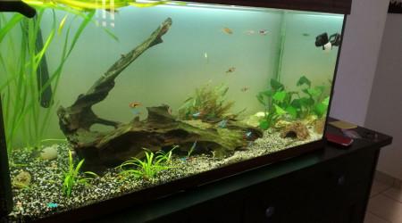 aquarium 180litre