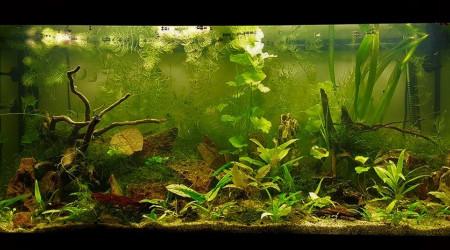 aquarium 200L Amazonien