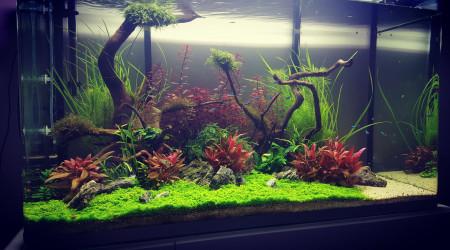 aquarium Mon premier aquascape