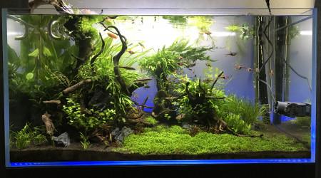 aquarium Aquascaping 180