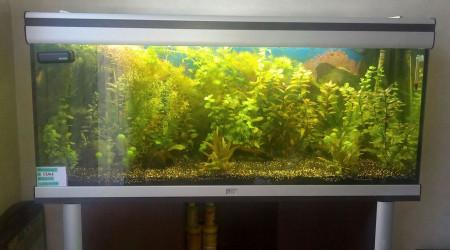 aquarium 240L