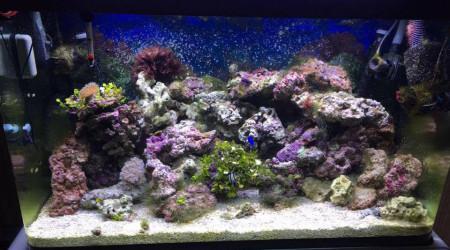 aquarium l'océan a la maison