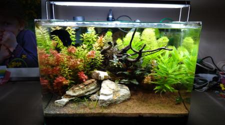 aquarium scaper's tank 1