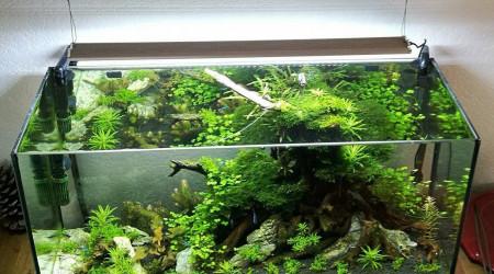 aquarium 80L Gege77