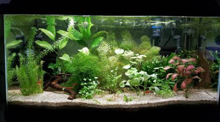 aquarium 60litres