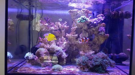 aquarium Elos 70