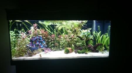 aquarium 180l