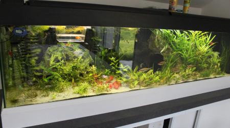 aquarium salon
