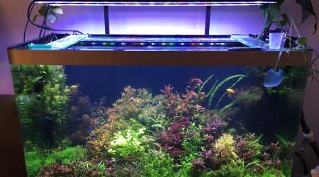 aquarium Osaka 260 Biotope asiatique