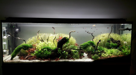 aquarium 300l